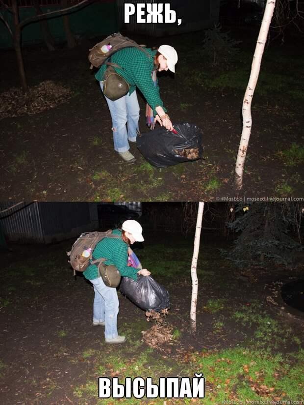 Что делать, если у вас во дворе воруют опавшие листья