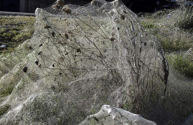 Полчища пауков захватили побережье в Греции