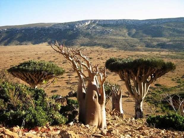 Socotra10 Удивительный остров Сокотра