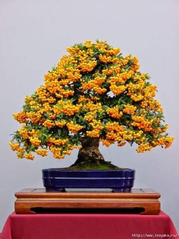 3925073_tree61 (525x700, 182Kb)