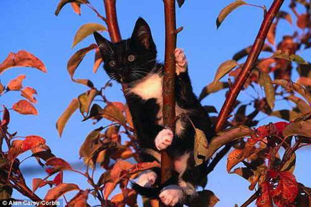 Котенок, спасенный пользователями Фейсбука