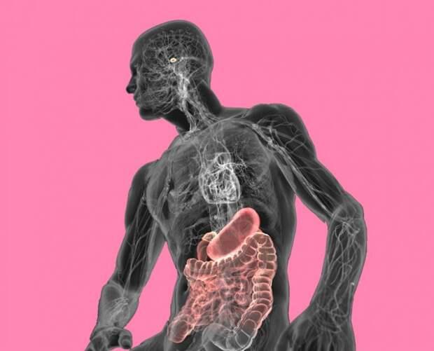 Правила, которые помогут исцелить кишечник