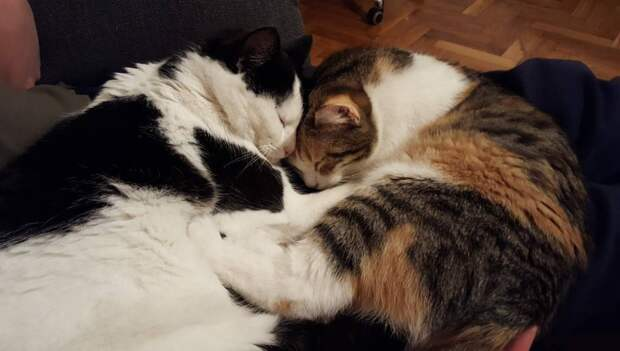 Вместе на 9 жизней: 13 фотодоказательств кошачьей любви