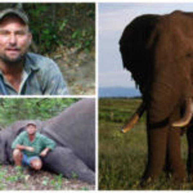 В Зимбабве во время охоты застреленная слониха раздавила человека