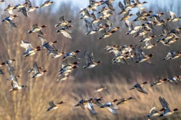 ТОП-10: Пугающие факты об утках
