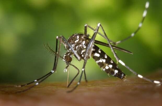 Что делать, если покусали комары? Что делать, оказание первой помощи, отравление, памятка, полезные советы, солнечный ожог, хитрости