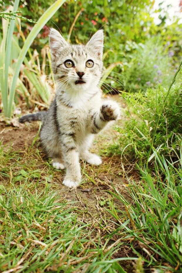 В саду семьи появился жалкий больной котёнок, которого сразу впустили в дом и обогрели
