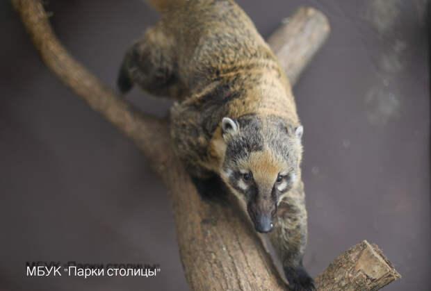 В cимферопольском зооуголке появились носуха Лола, лань Бэмби и козлик Нолик