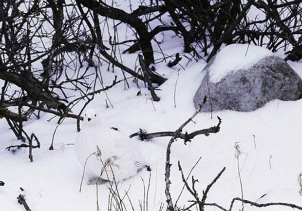 Найдите на фото спрятавшихся животных