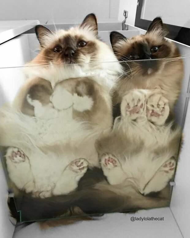 Лола и Нина желают хорошего дня! котики, коты, милота, мотики, сквозь стекло