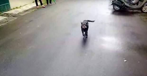 Потерянная собака ищет путь домой 6 дней