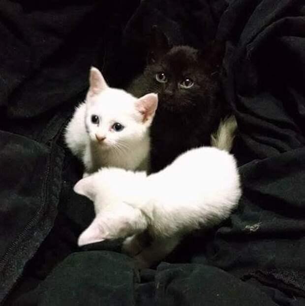 После потери любимого кота женщина пошла к соседу за котенком, но взяла сразу трех
