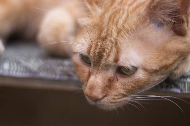 грустный кот (фото pixabay.com)