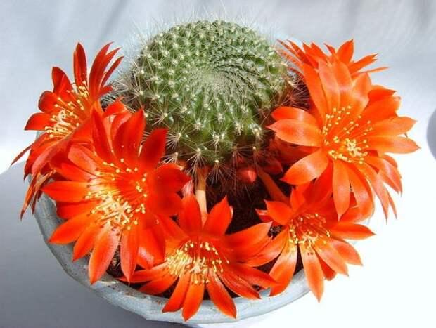 Комнатные растения - ваша судьба на подоконнике