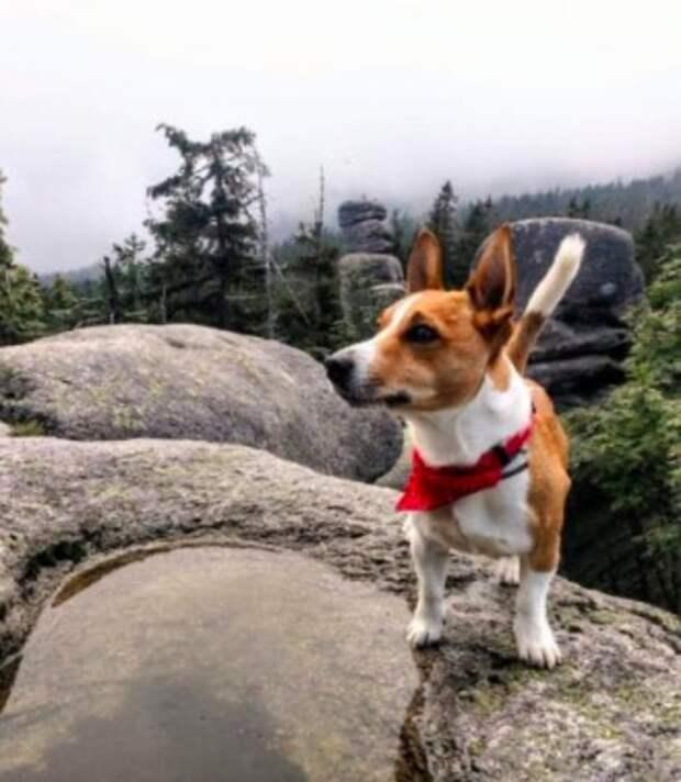 Пёс лаял и пытался увести хозяина в лес, пока тот не согласился