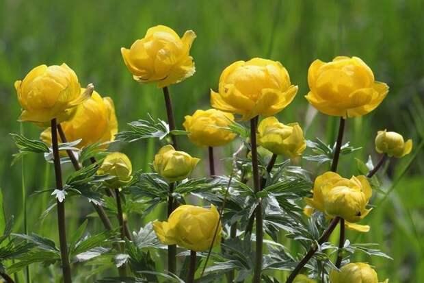 Самые неприхотливые цветы для дачи: фото и названия