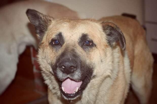 Пса выбросили из машины, и два года он скитался по улицам, пока местные жители не стали гнать его прочь