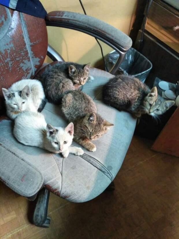 Котятки уже страдают и рискуют жизнью! Просим вашей помощи для этих крох!