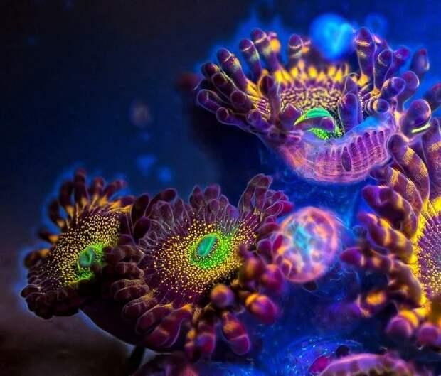 17 вещей, которые теряют привычный облик под действием ультрафиолета
