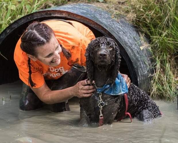 Британское развлечение: забеги с собаками по грязи