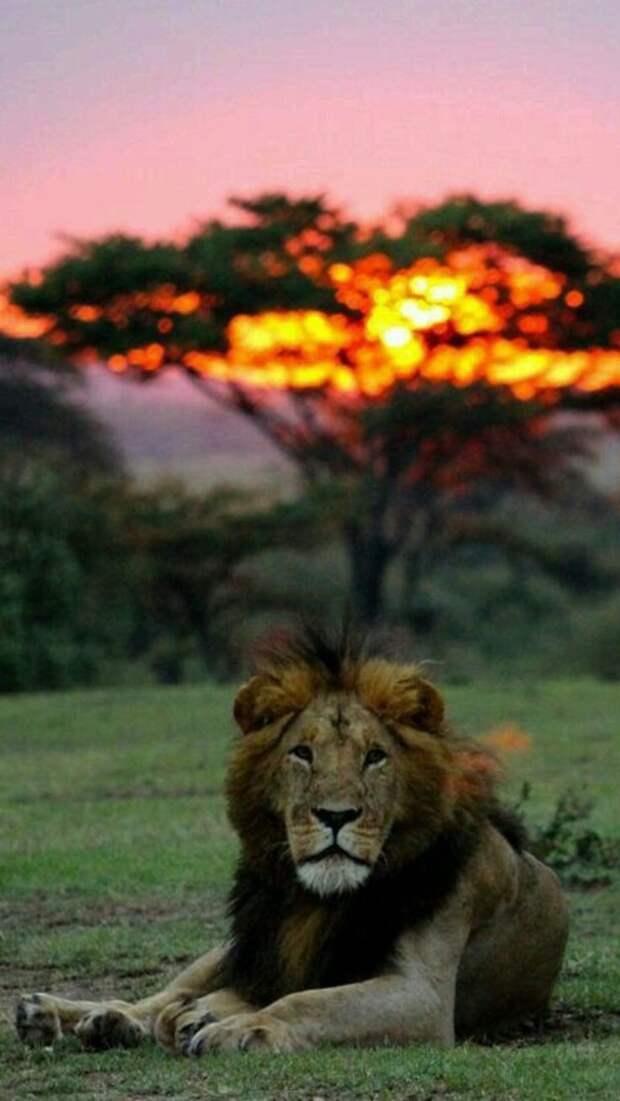 Невероятные и очень красивые фотографии для настроения