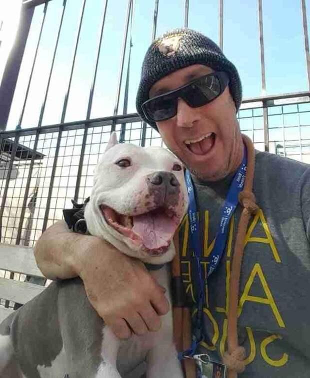 Через три года после пропажи Люси увидела на телеэкране пса и тут же его узнала в мире, животные, находка, питбуль, повезло, пропажа, собака, сша