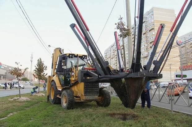 С места будущей трамвайной линии в Краснодаре начали убирать липы