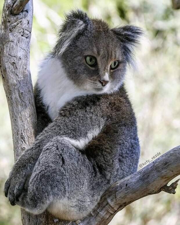 10 уморительных фото животных, если бы они были котиками