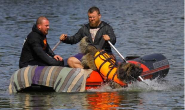 Жительница Куркина и её спаниель приняли участие в спасательной операции