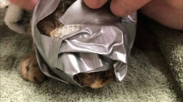 Спасение кошки, которую замотали в скотч и выкинули на улицу