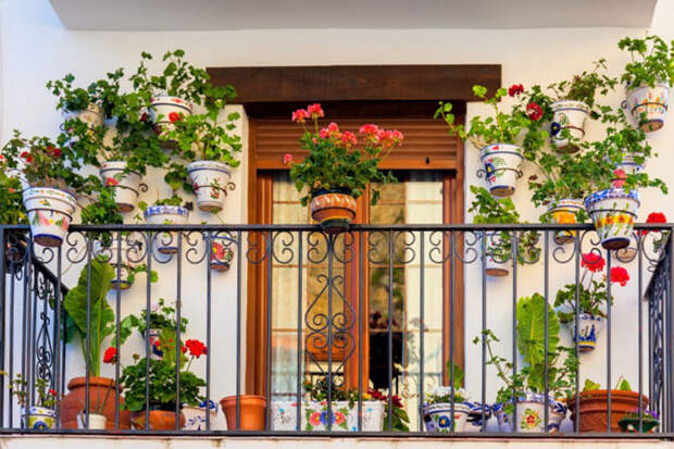Простые способы устроить дома собственный сад