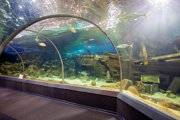 Зоопаркам и океанариумам Кубани выделят субсидии из-за пандемии