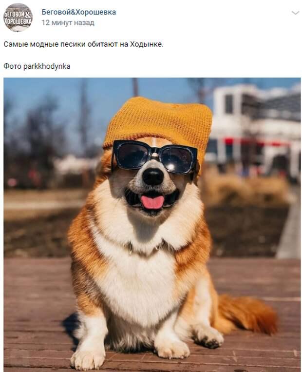 Фото дня: модный пес вышел на прогулку по Ходынскому парку