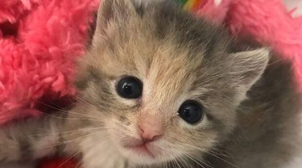 На стройплощадке раздавался отчаянный писк: крошка-котёнок недавно родился, а уже успел остаться один