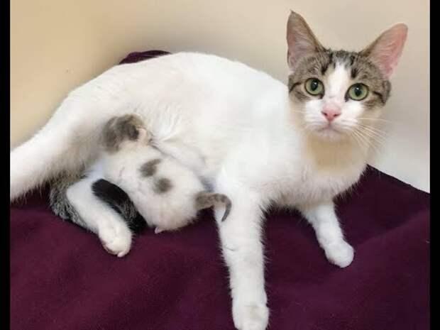 Бездомная кошка-мать чуть не бросалась на людей – и всё из-за горячо любимого котёнка…