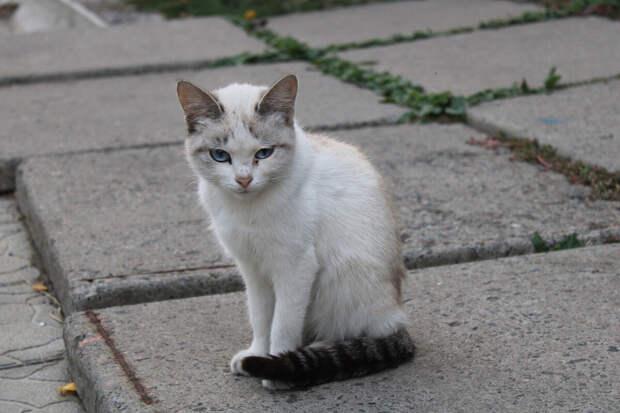 К нам навстречу сбежались котята и кошки разных возрастов, мастей и окрасов. Лишь одна кошечка сидела в сторонке, опустив глаза