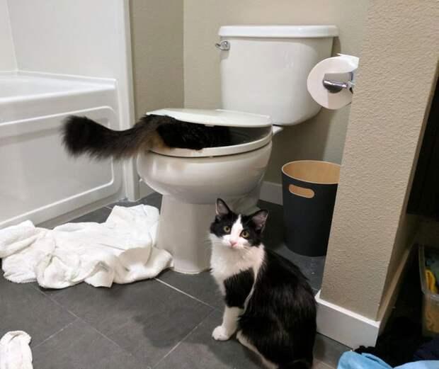 кот в унитазе