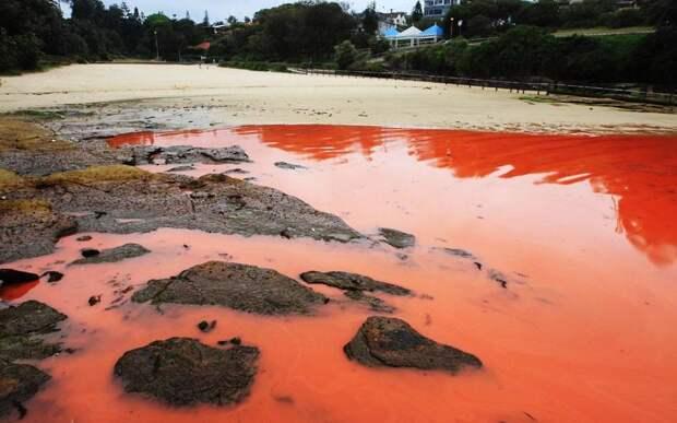 krovavoaliokean 6 Вода на пляжах Австралии окрасилась кроваво красным, напугав отдыхающих
