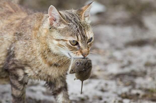 Особенности поведения животных как результат длительного сосуществования с человеком животные, коты, это интересно