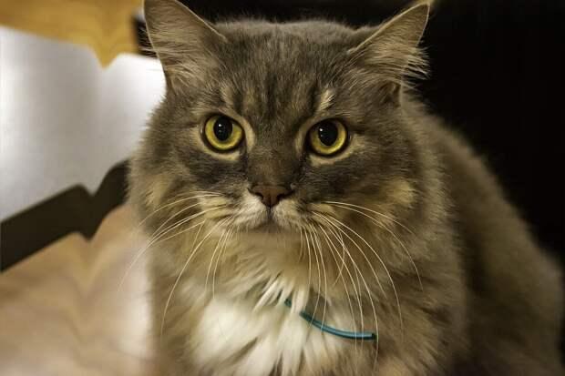 Кошка шипела и не подпускала хозяина к холодильнику: тот поднял тревогу