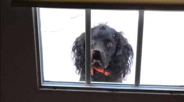 Пёсика посадили за дверью, чтобы он «пугал» людей в Хэллоин. Из-за своей забавной привычки он выглядит немножечко жутко