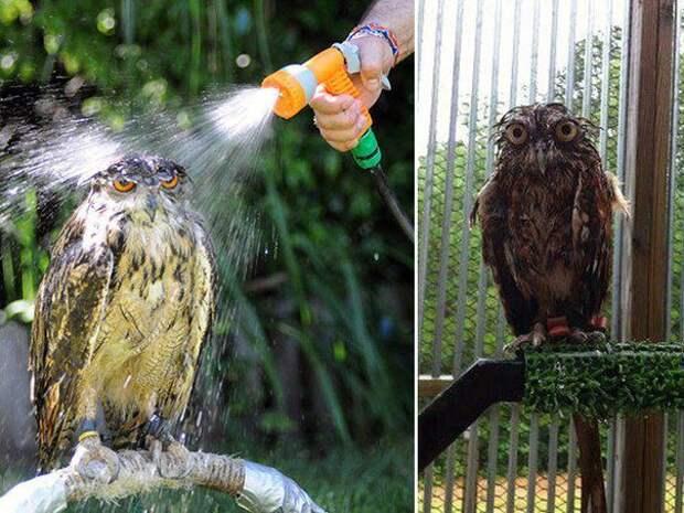 Мокрые совы  совы, мокрые совы
