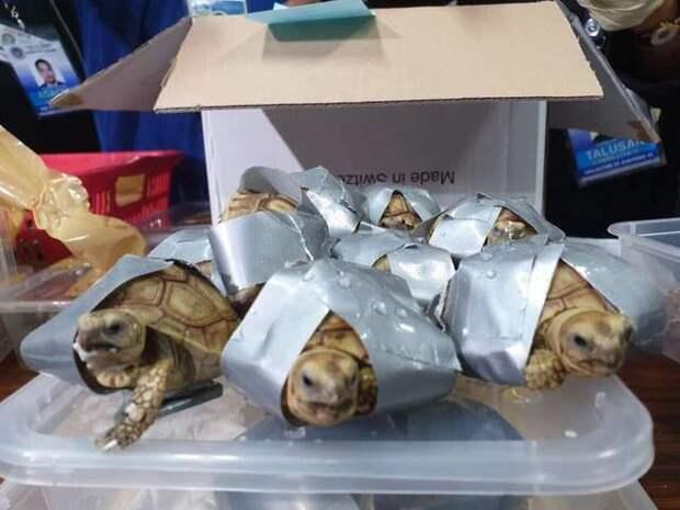 черепахи обмотаны скотчем
