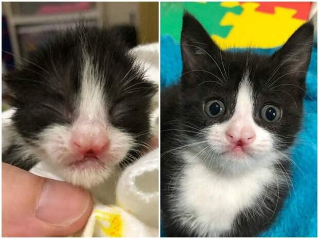 Новорожденные комочки пищали в траве - один из них оказался особенным истории спасения, коты, котята, кошки, особенные животные
