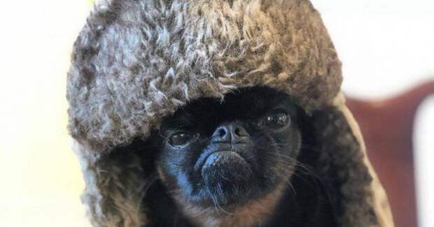 «Сердитый» пес Чико стал мемом и любимцем пользователей сети