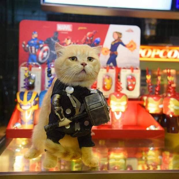 Кот носит костюмы супергероев и покоряет сердца людей по всему миру
