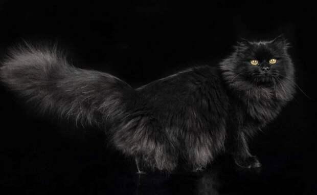 У вас мыши есть? Он распахивает пальто и оттуда огромный, чёрный кот прыгает ко мне в окно