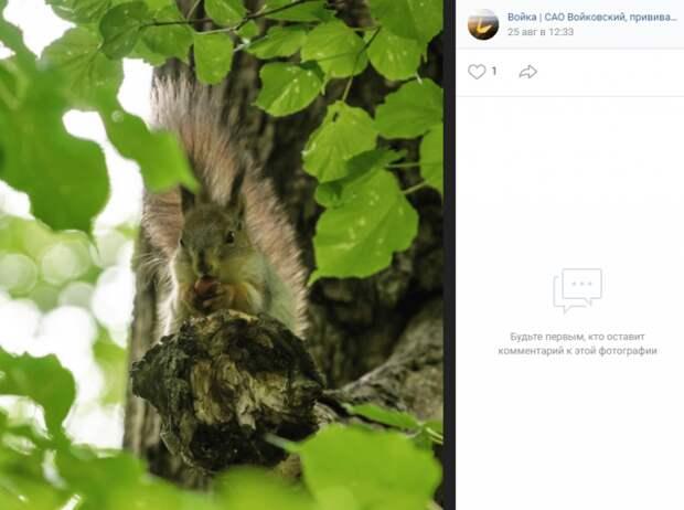 Фото дня: белку из парка «Покровское-Стрешнево» застали за поеданием орехов