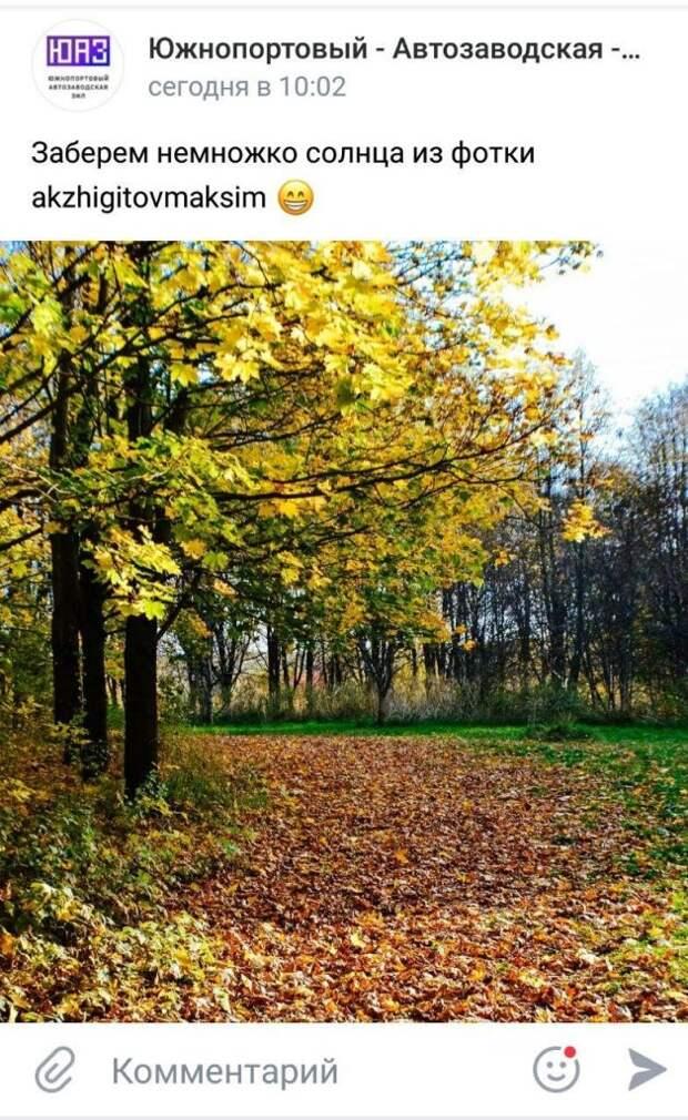 Фото дня: тропинка из желтых листьев