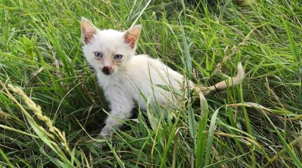 Котенка выбросили из машины и кроха остался один посреди поля…